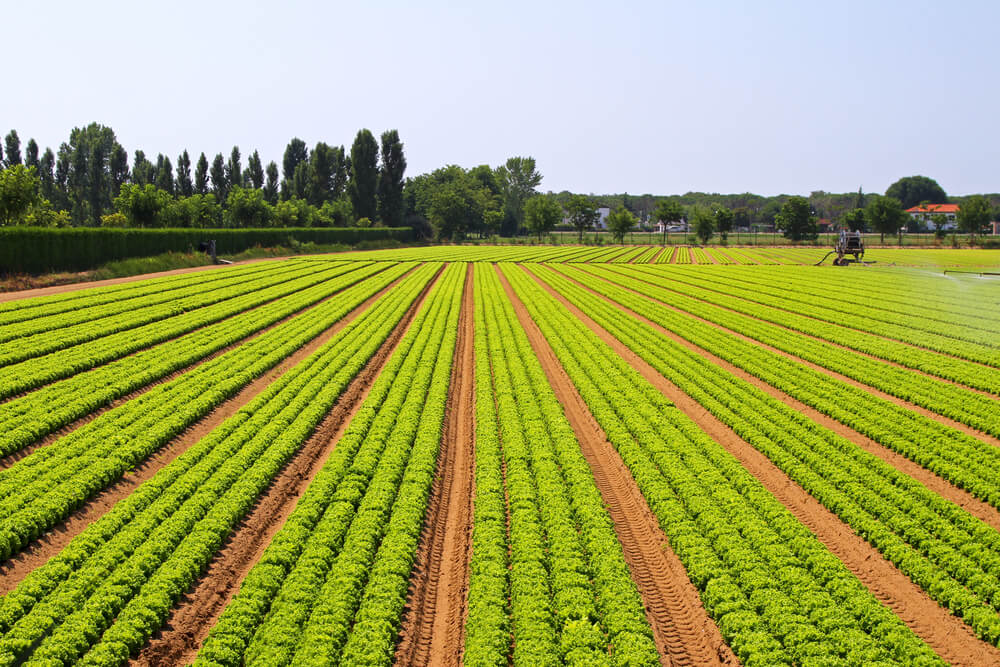 Logística de produtos agrícolas: desafios e possibilidades